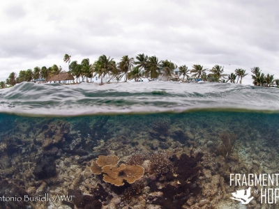 Fragments of Hope COral restoration Belize