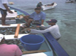 Sustainable Reef Fisheries Development in the Rodrigues Lagoon