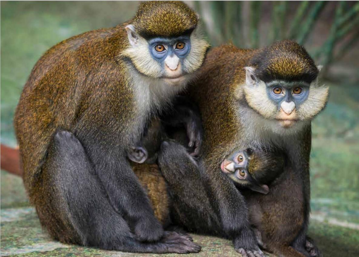 monkey%201.jpg