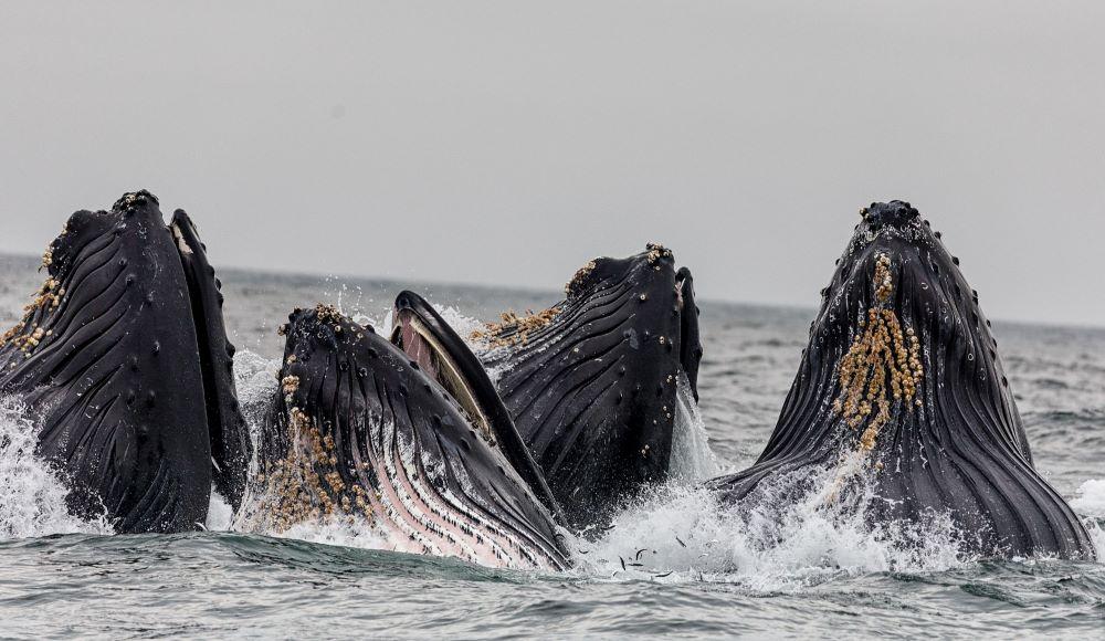 whale%201%20small.jpeg