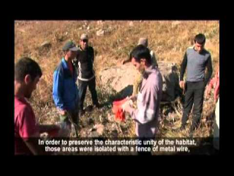 Armenia:Conservation of Vipera darevskii   in Ghazanchi community
