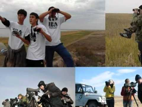 Kazakhstan - Conservation of Pilot Important Bird Areas