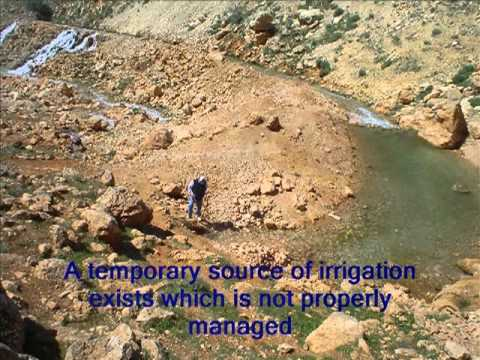 Lebanon - Improving Rangeland and Carpet Production in Irsal Area