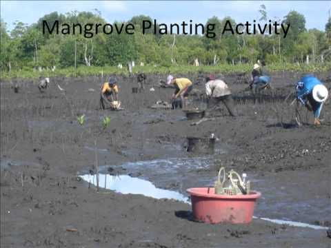 Cambodia - Mangrove and Sea Grass Conservation for Coastal Community