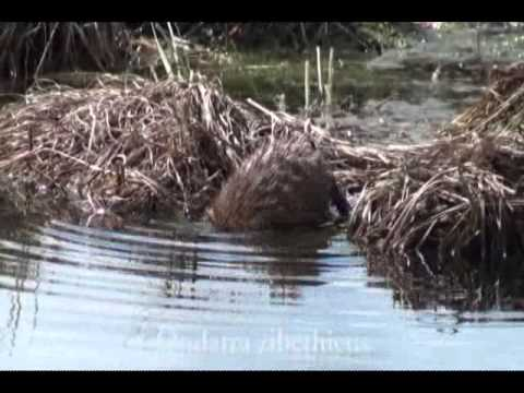 Armenia: Restoration of the wetland ecosystem in the old riverbed of the Akhuryan river u