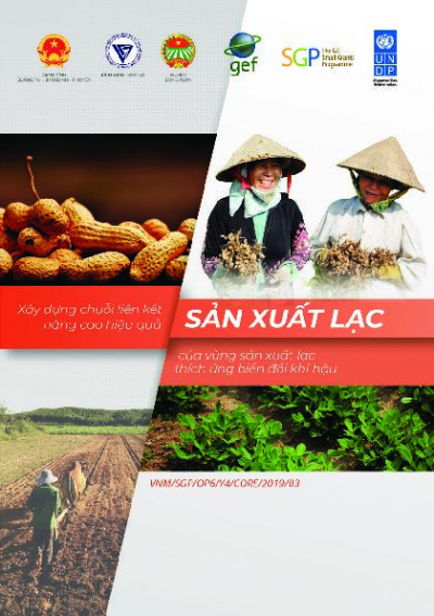 Promoting value chains for CSA groundnut in Binh Dinh, Phu Yen and Quang Tri provinces.